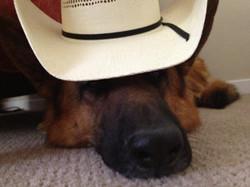 cowboyhatrex_small