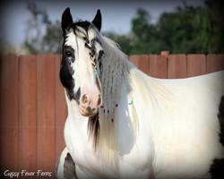 Jennifer of LexLin gypsy vanner mare