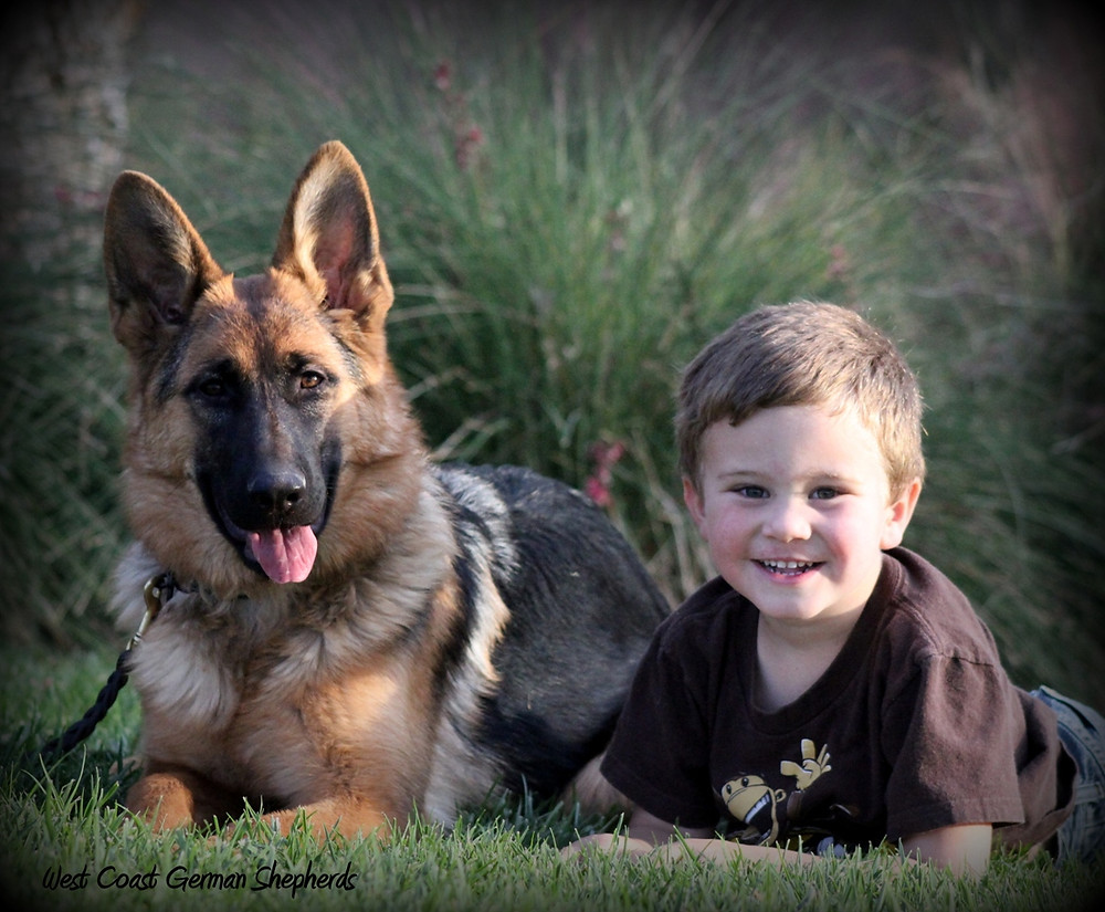 German shepherd puppy with family