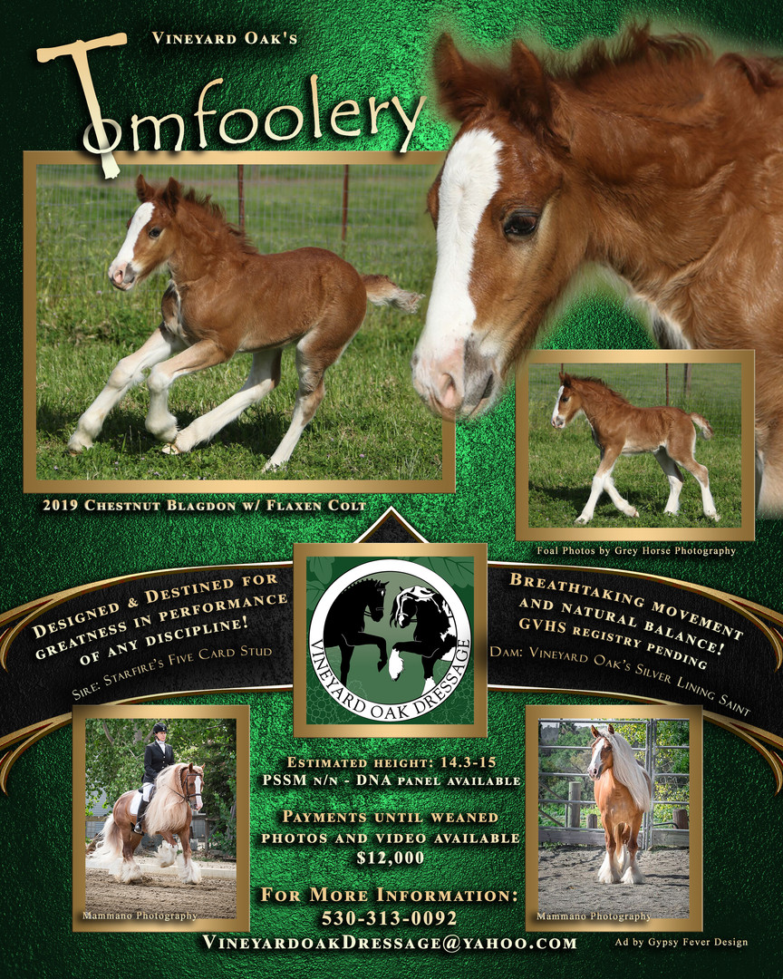 Sale Horse Promotional Ad