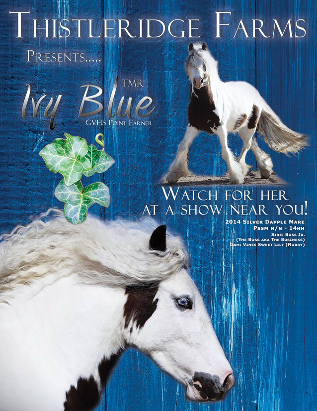 Show Horse Promotional Ad