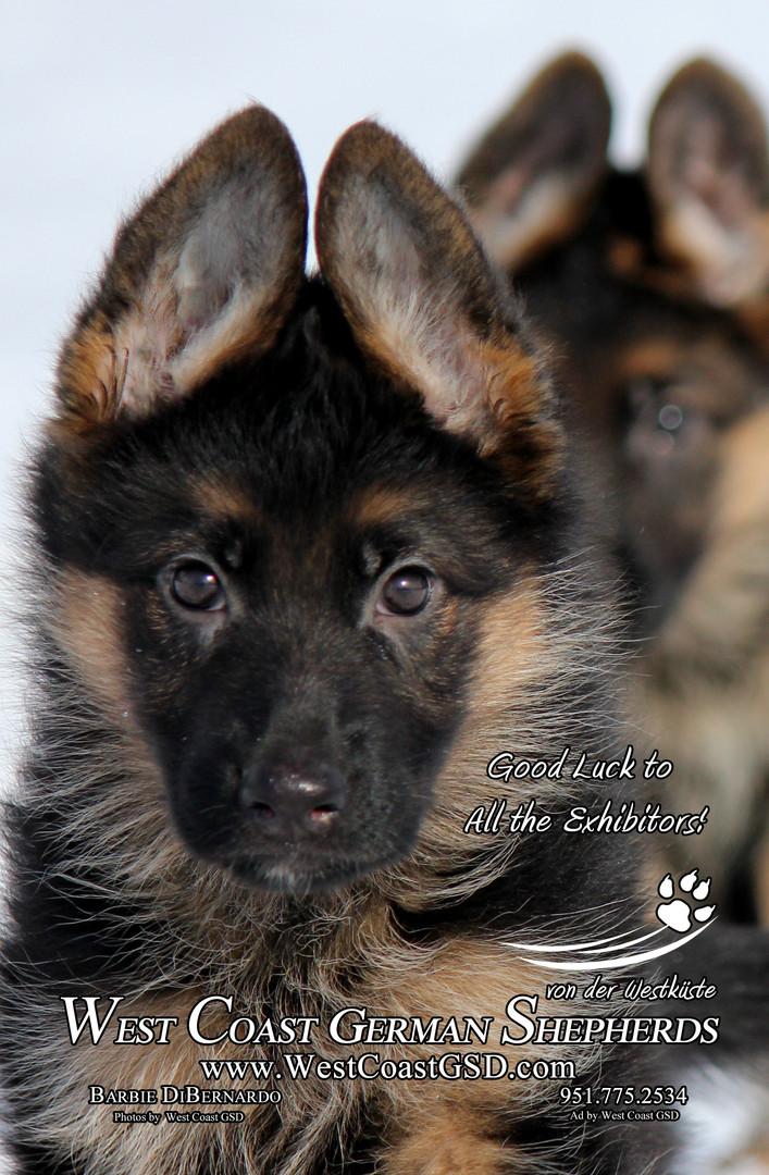 Dog Show Program Advertisement