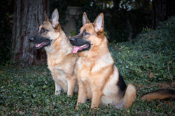 Bella and Uberlin by Tree12-12web_small