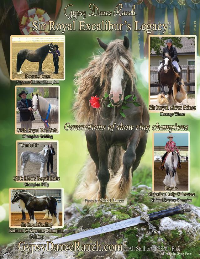 Stallion/Show Horse Promotional Ad