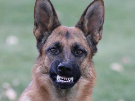 Dog Behavior – Reactive or Aggressive?
