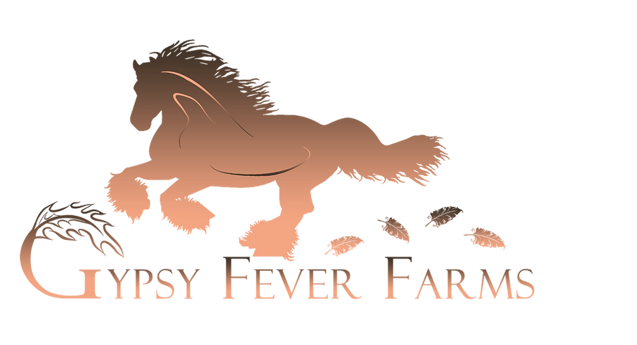 Gypsy Vanner Horse Breeders Gypsy Fever Farms