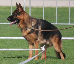 Gambler @ 13 months old in Germany