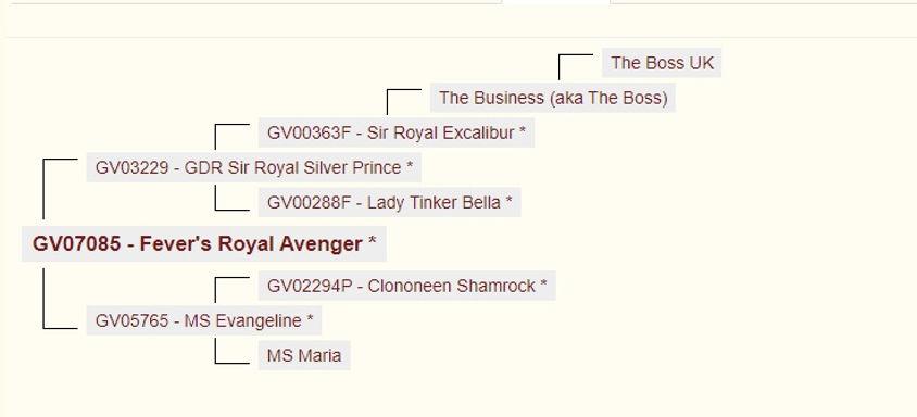 pedigree_fevers_royal_avenger.jpg