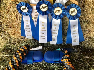 Saddle & Harness September's Wins!