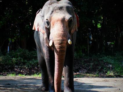 LINDAZOO アフリカ象!