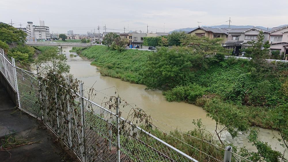 今週は雨が多くて小畑川も濁っています。地震か台風の影響でしょうか、屋根にブルーシートを掛けたお宅も見えます。