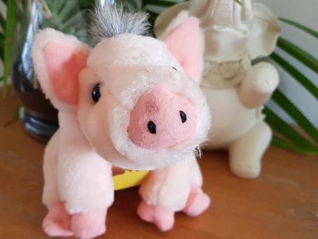 Meet Gabe - The Young Vegan Pig