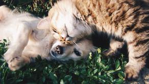 Should We Make Our Pets Vegan?
