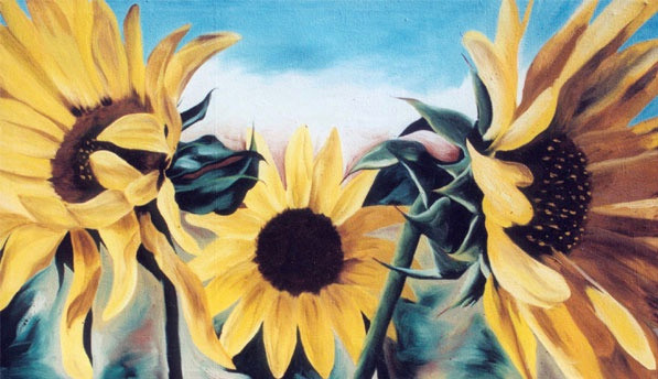 Taos Sunflowers