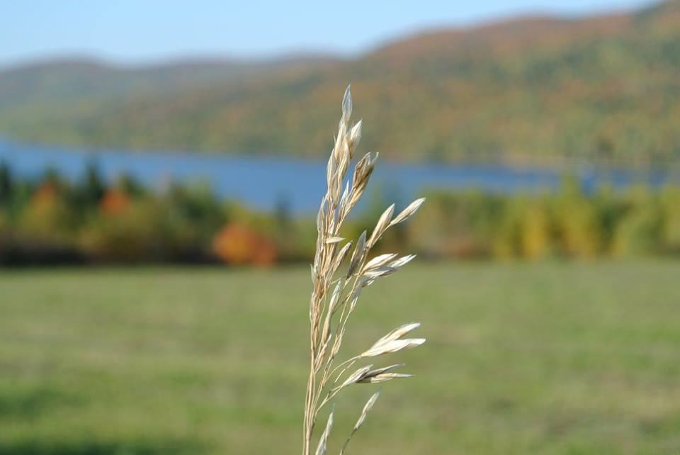 Lac Poh. automne