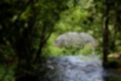 Art nature 1 - OTSancy (1).jpg