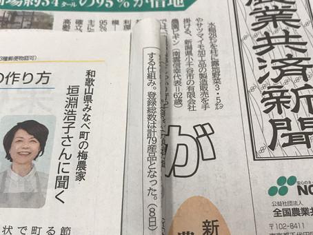 農業共済新聞に梅酒、梅シロップの漬け方紹介してます!