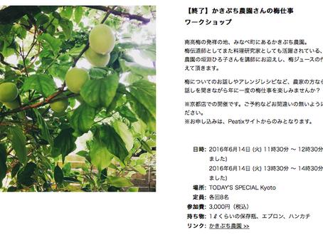 報告:梅シロップ作り教室(京都BAL Today's Specialさん)