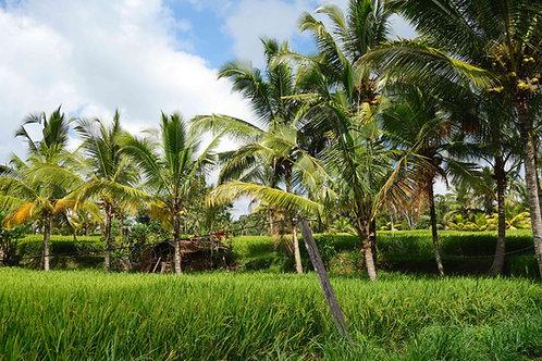 grüne Reisfelder Bali, schönste Bilder Bali, schönste Fotos Bali