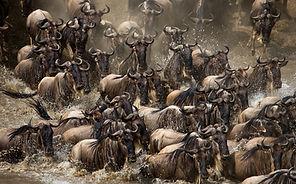 Große Migration Masai Mara, Afrika Spezialist, Weltreise Reisebüro, weltreise organisiert