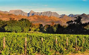 Weinreisen buchen, Weinreisen Reiseveranstalter, Weinreisen Reisebüro, Weinreisen Veranstalter