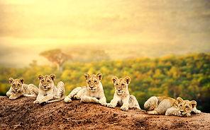 Kenia Reiseveranstalte, Reise nach Afrika planen, Reise durch Afrika, Reiseroute Afrika, besondere Reiseroute Afrika
