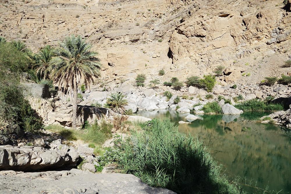 Oase Oman, Wadi Bani Khalid, Wadi Oman, Travel Edition Reiseblog, Travel Edition blog, Reiseblog