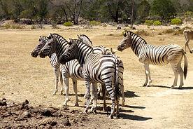 Weltreise Afrika, Weltreise individuell, Weltreisen ohne Gruppe, Weltreise ohne gruppe