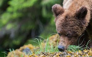 Kanada Bären, Kanada Wildnis, Lodges in Kanada
