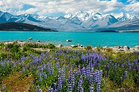 Weltreise Neuseeland Wohnmobil, Neuseeland Wohnmobil, Weltreise Online Reiseveranstalter
