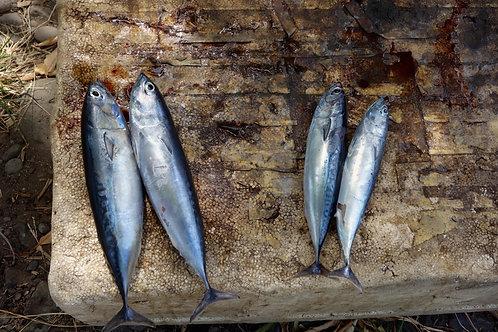 Fischbilder, Fischbilder Jesus, religiöse Fischbilder, Fisch und Brot