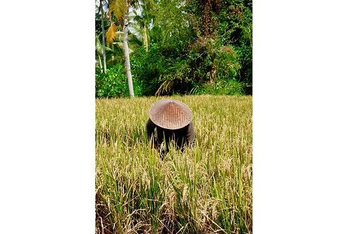 Reisbauer Bali Foto, Bauer im Reisfeld Bali, Kegelhut Bali