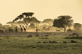 Weltreise Afrika, Afrika Rundreise, Kenia Rundreise, Safari in Kenia, Safari Südafrika, Safari Masai Mara