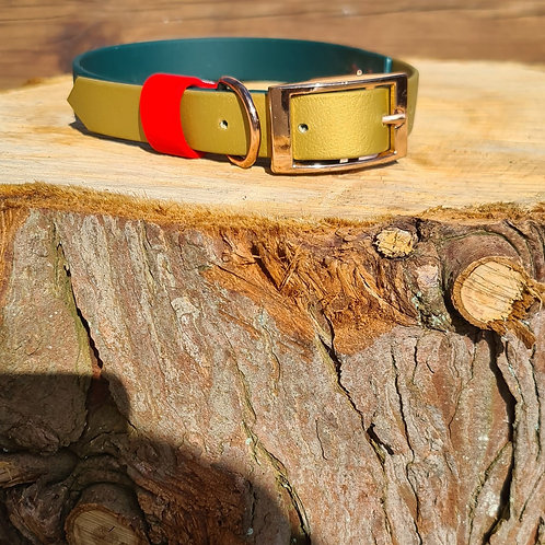 dark green and gold with red bioithane collar with strap keeper