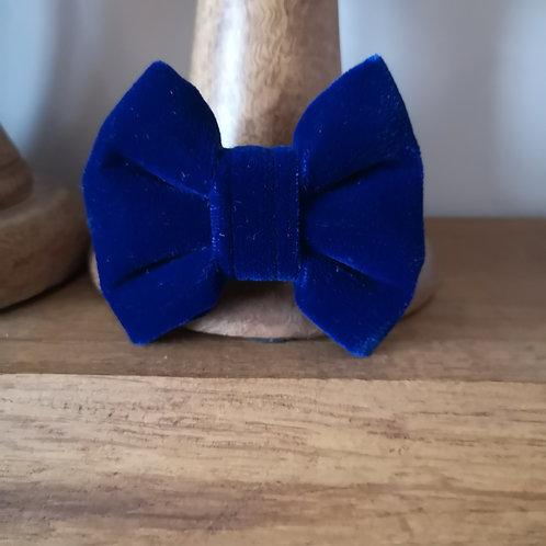 royal blue velvet bow