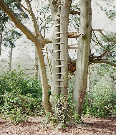 TREEHOUSE600.jpg
