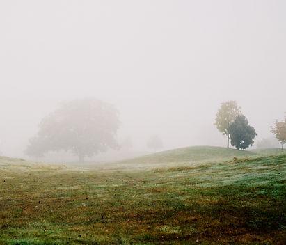 Warwickshire-12---Mist-Field-Trees.jpg