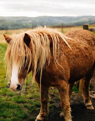 Horse-1_edited.jpg