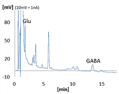 Glutamate & GABA offline c.png