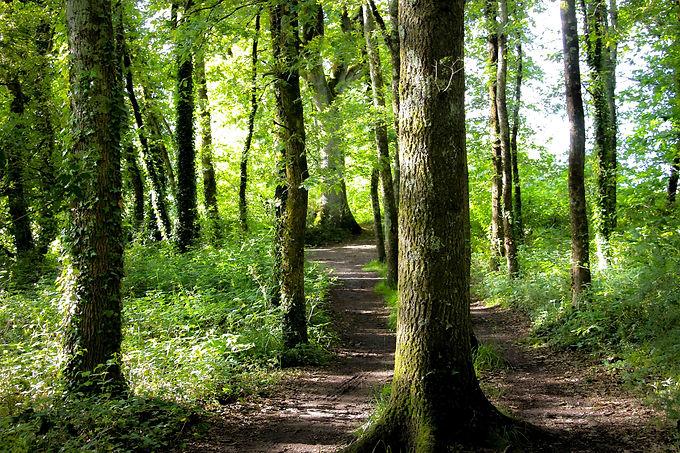 Forêt et troncs d'arbres pour la pratique de la sylvothérapie