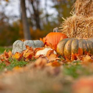Fall-Haystack-Pumpkin-Zoom-Background.jp