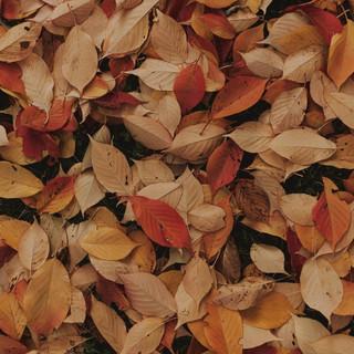 Leaves-Zoom-Background.jpg