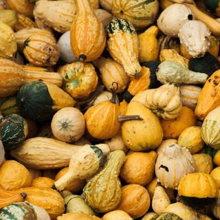 Gourds-Zoom-Backdrop.jpg