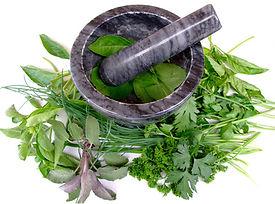 plantes-médicinales.jpg
