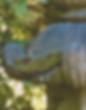 toroI-061816.png
