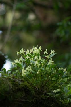 Flora de Aguti