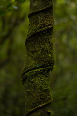 Naturaleza en Aguti