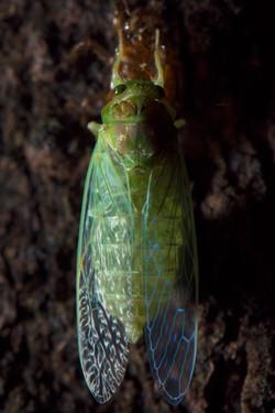 Insectos en Aguti