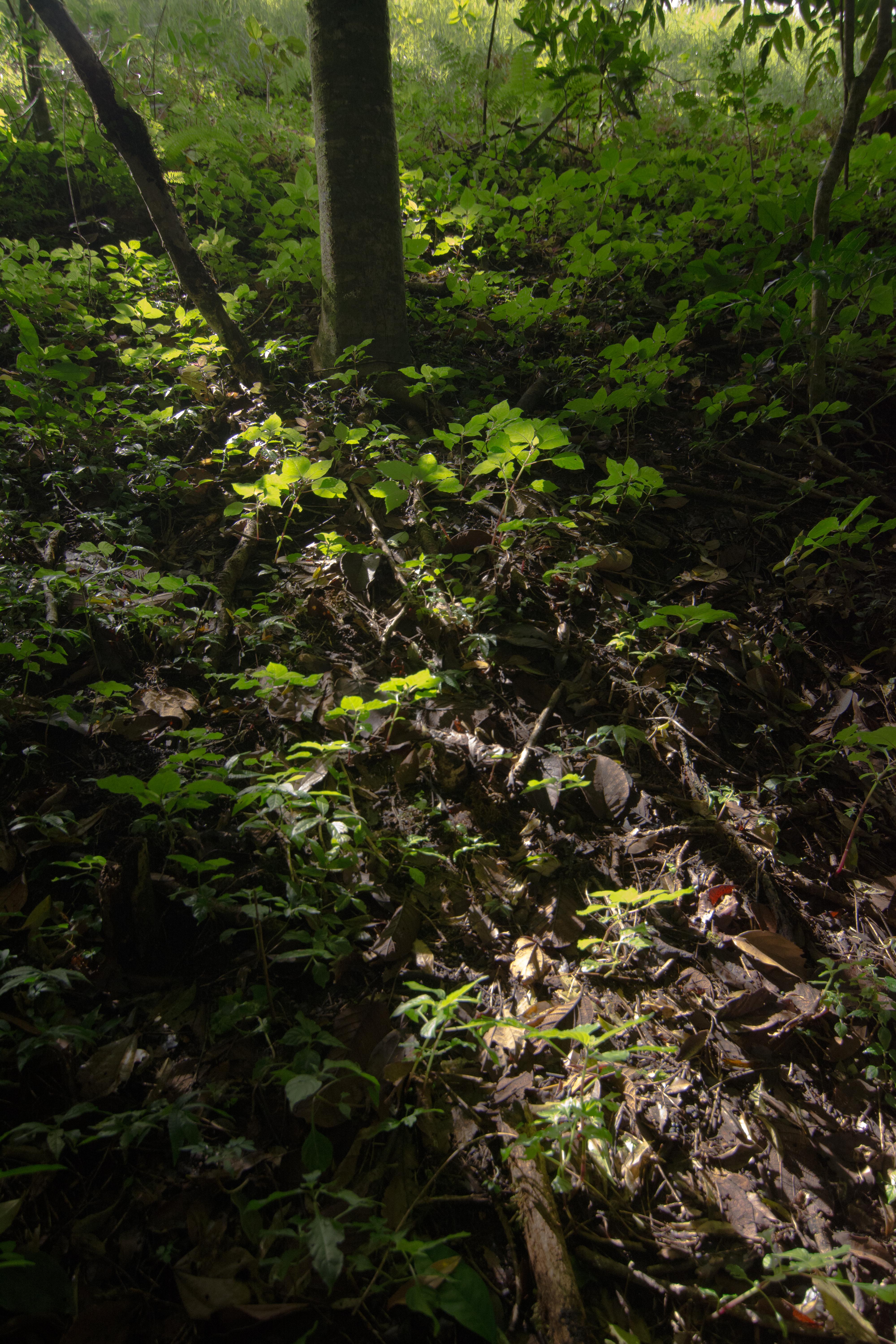 Bosque en Aguti
