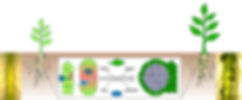 EMBOverview copy.001.jpeg